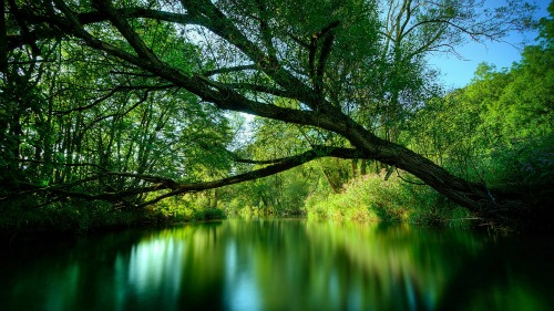 Hình nền cảnh thiên nhiên những dòng sông tươi mát