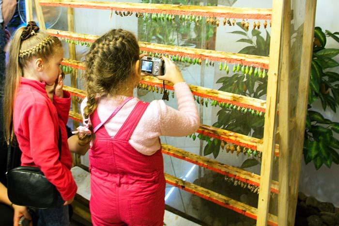 Инсектарий для бабочек своими руками