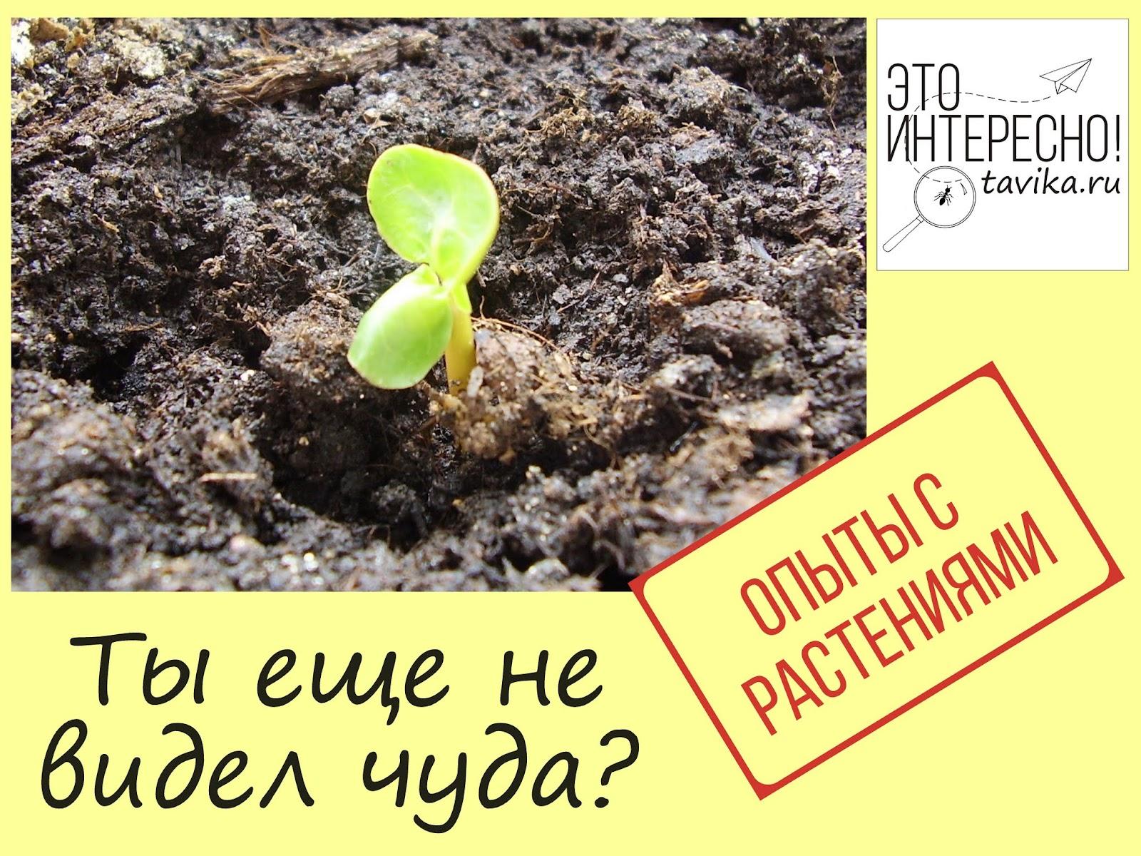 опыты с растениями - ускоренная съемка роста