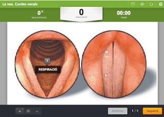 http://www.educaplay.com/es/recursoseducativos/588573/la_veu__cordes_vocals.htm