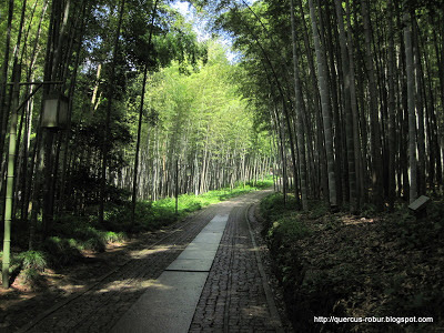 Bosque de bamb en la parte baja de Woo Yong Shan - Hangzhou