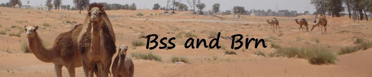 Bss & Brn in Abu Dhabi