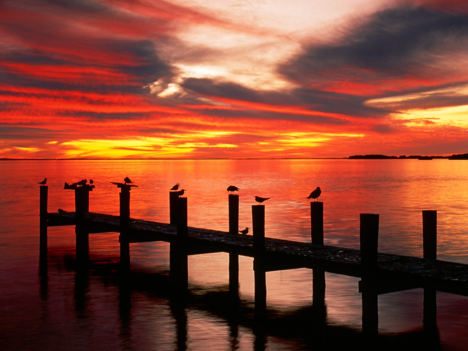 seagulls at sunset florida wallpapers - Seagulls at Sunset Florida Wallpapers HD Wallpapers