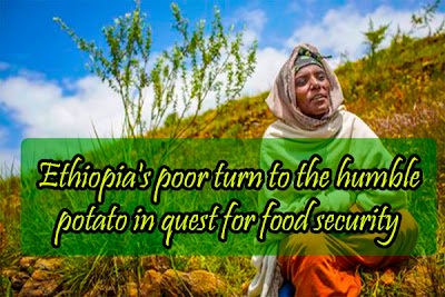 Ethiopia's poor turn to the humble potato in quest for food security