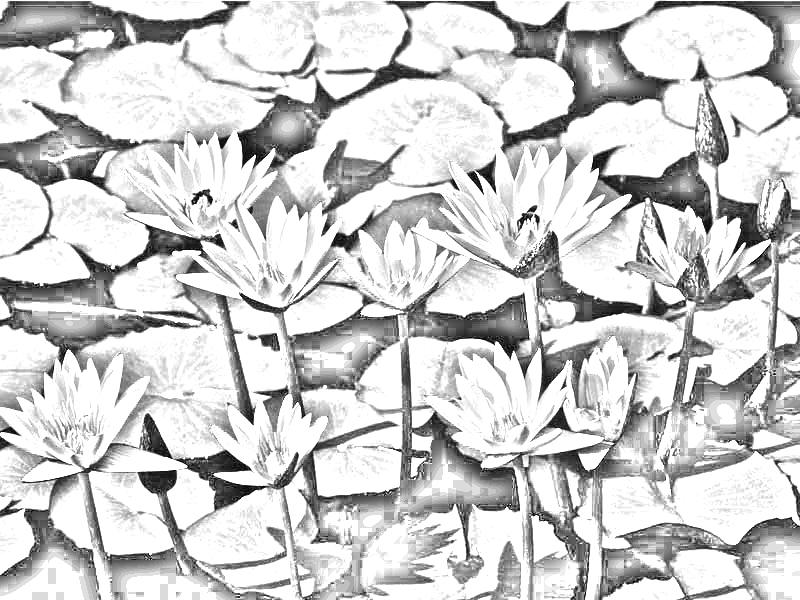 Membuat Gambar Menjadi Lukisan Hitam Putih