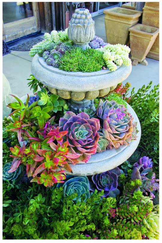 Think global garden local debra lee baldwin 39 s ten steps to a lush and lovely container garden - Succulent container gardens debra lee baldwin ...
