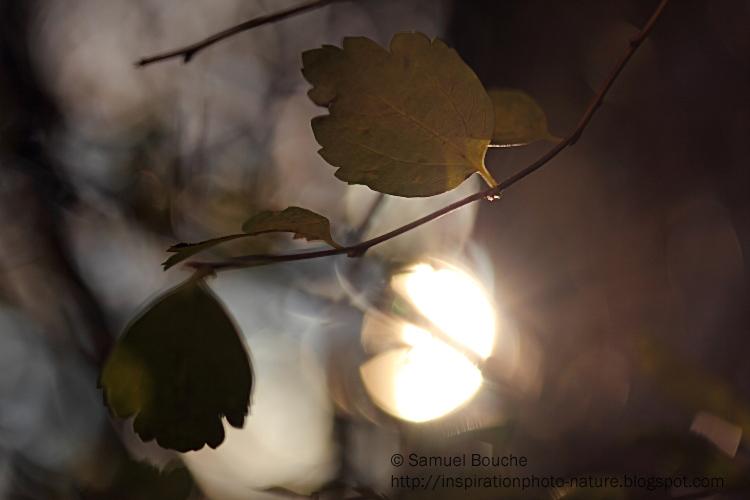 soleil d'hiver macro