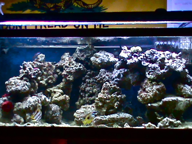 What Makes A Great Aquascape Reef Sanctuary