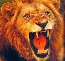 obat terkena raja singa
