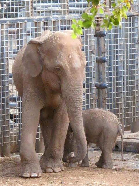 תוצאת תמונה עבור רצח פילים