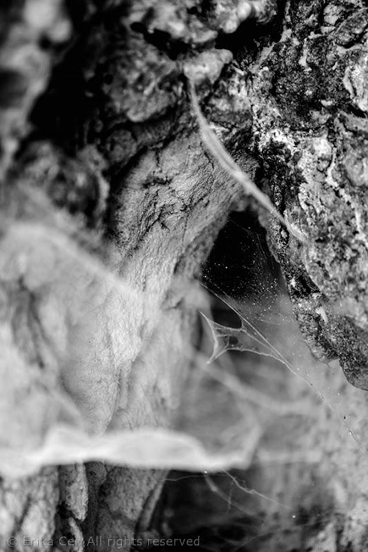 Grotta 334 Val Rosandra