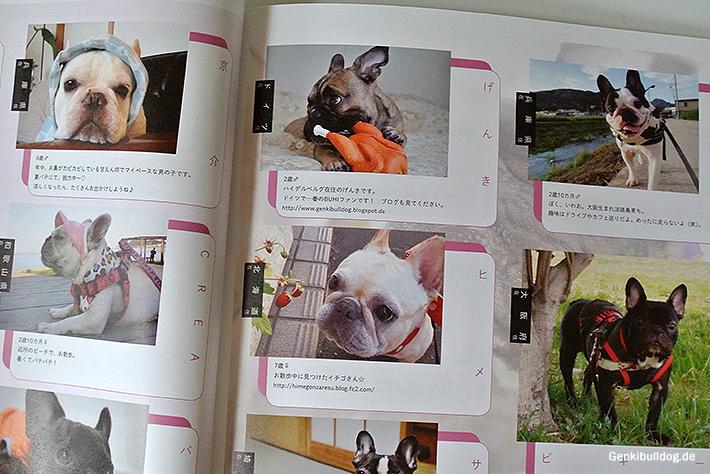 BUHI Französische Bulldoggen Magazin Nr.32