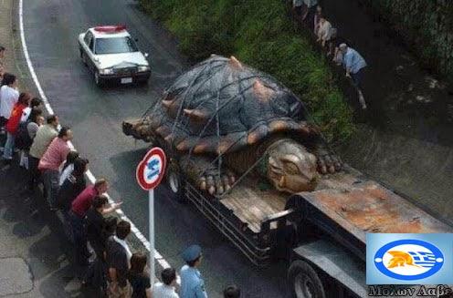 Γιγάντια μεταλλαγμένη χελώνα