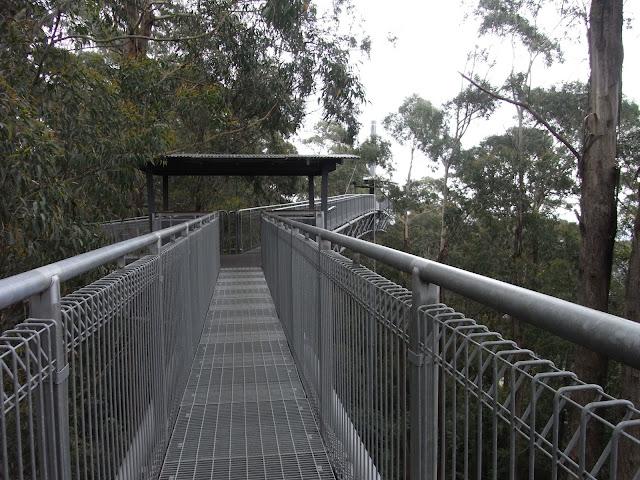 Elevated walkway, Illawarra Fly Treetop Walk