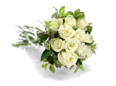 gambar_mawar_putih_unik