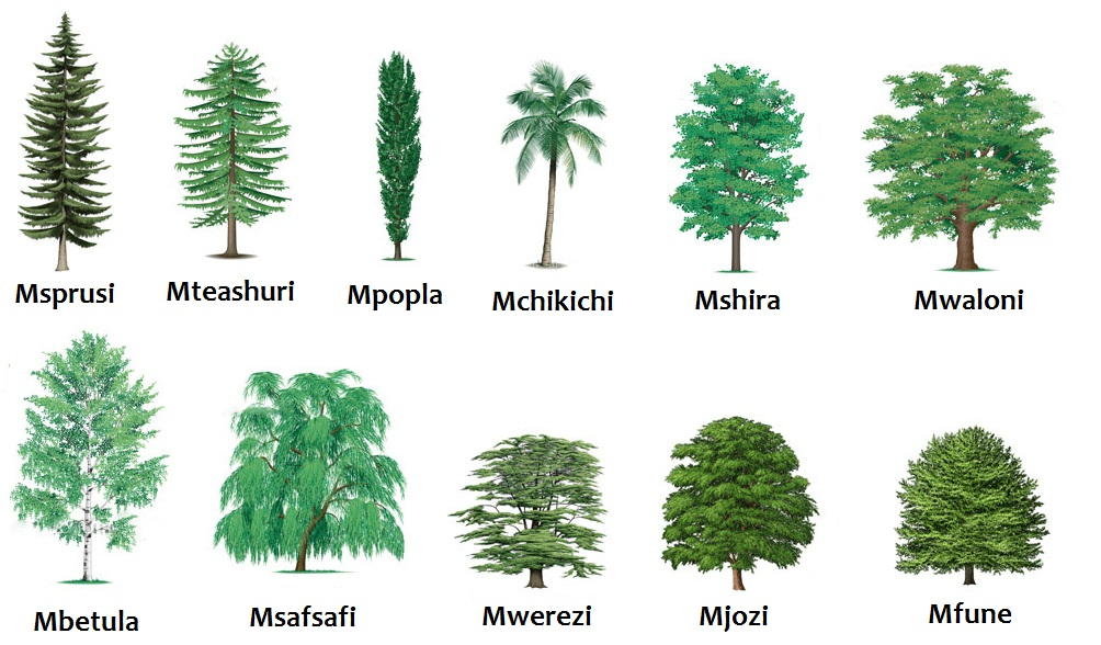 essay on different kinds of trees Trees come in different shapes and sizes there are several types of trees or tree species in the world that make part of our ecosystem that acts as a habi.
