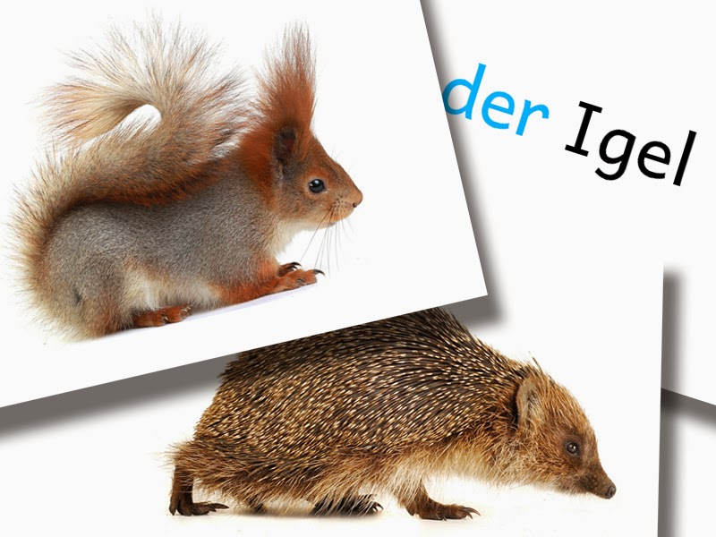 DaZ Material Tiere Bildkarten zur Sprachförderung kostenlos