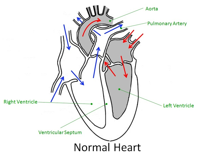 Heart Diagram to Label Ks2 images