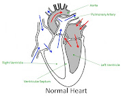 . this is a minor issue and does not require treatment. The Heart Problems