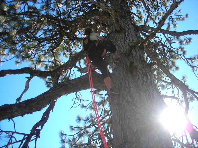 Redwood Rendezvous Climber