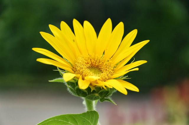 Flor fotografía macro y de aproximación