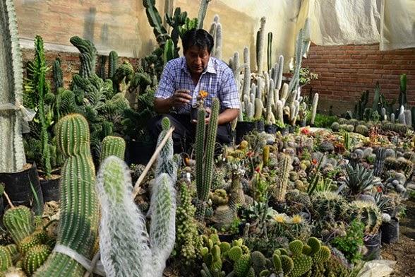 Vivero abre mercado para variedad de cactus agronomia for Vivero de cactus