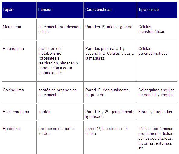 Organización de los S. vivos. Tejidos y Órganos vegetales/animales ...