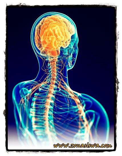 Sistem Saraf Manusia | www.zonasiswa.com