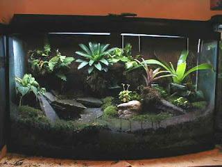 Terrario para las iguanas