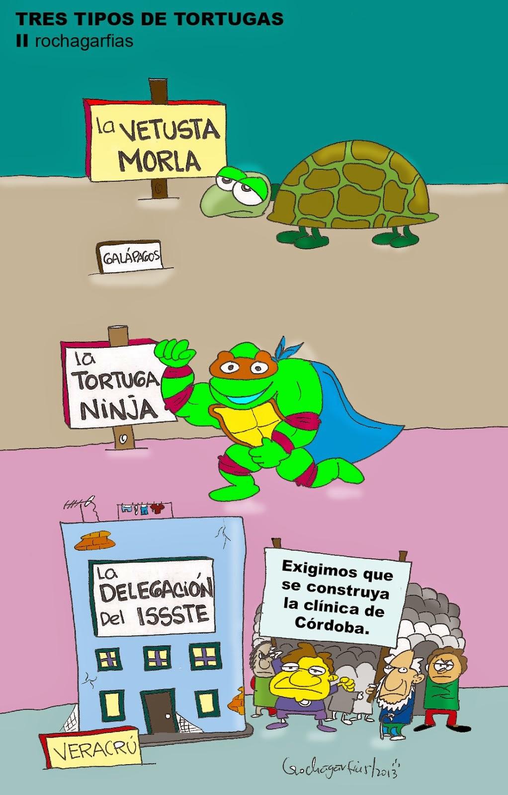 Tres tipos de tortugas.