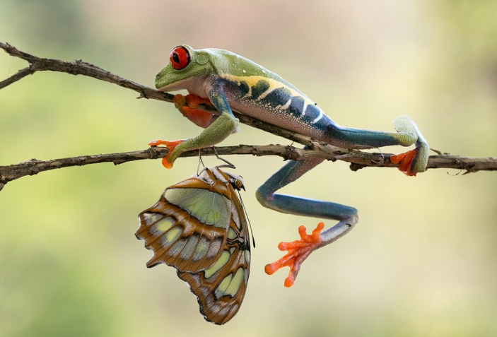 A frog and a butterfly