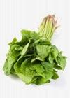 Bayam Makanan Sumber Asam Folat untuk Ibu Hamil