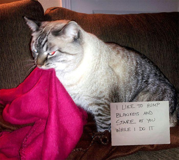 cat rabies vaccinations