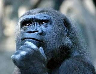 macaco pensando filosofando