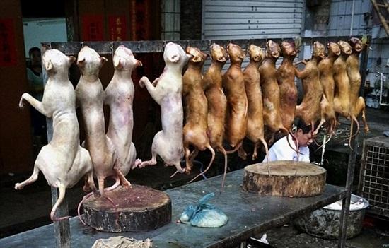 Daging anjing, dijual di pasar basah Phnom Penh