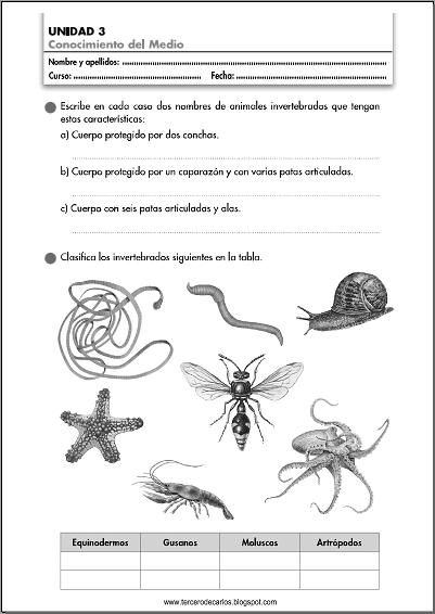 http://www.primerodecarlos.com/TERCERO_PRIMARIA/octubre/Unidad3/fichas/cono/cono2.pdf