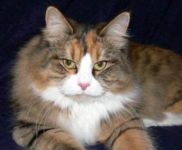 Cute Pussy Cat 23