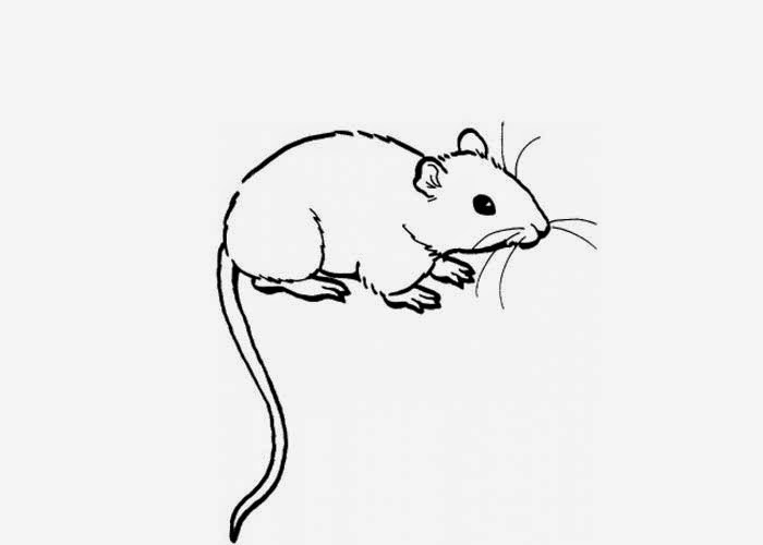 cute rats colouring pages - photo #18