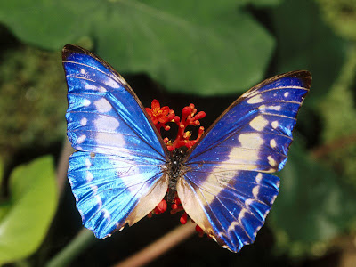 Beautiful Butterfly Normal Resolution Wallpaper 18
