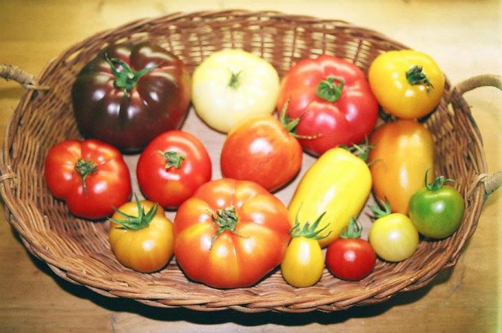 Quelques récoltes dans le Jardin des Fées