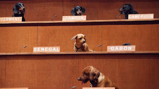 dachshunds, United Nations, Dachshund UN, dogs, diplomacy, wiener dogs