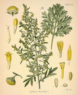 Losna, Artemísia absinthium