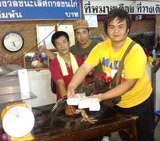 ayam jawara di thailand
