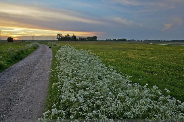 Nieuwe Keverdijkse Polder Natuurontwikkeling Naardermeer