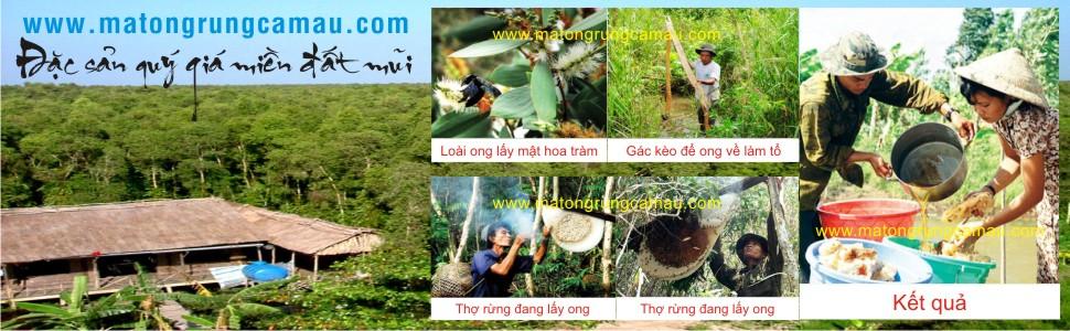 Sáp ong, Mật ong rừng tự nhiên 100% - Mật ong Rừng U Minh Cà Mau