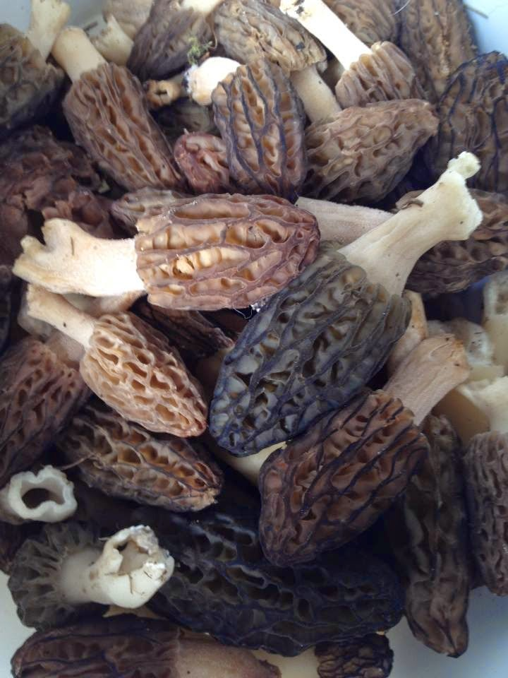 how to tell if a mushroom is edible