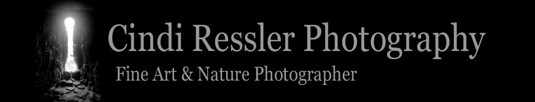 Cindi Ressler Photography