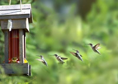 Bird Colibri Home Picture
