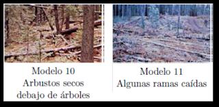 Modelos 10 y 11 según Rothemel.