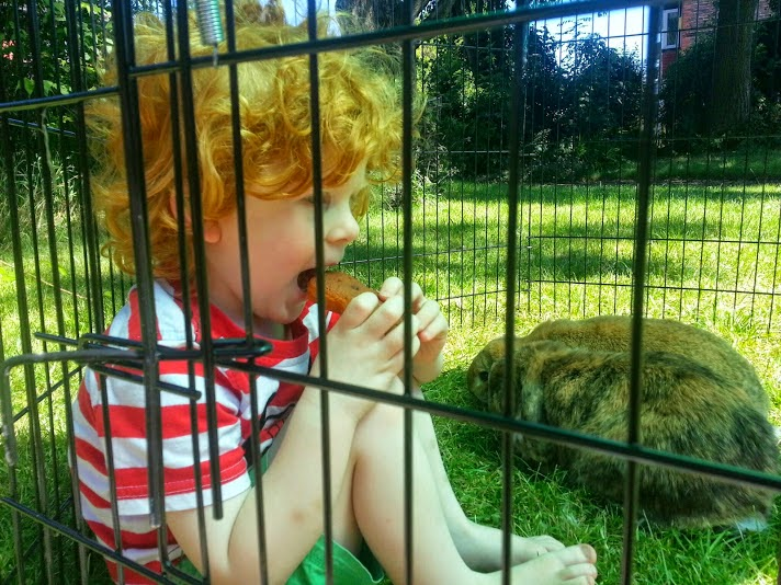 Barny Bear's Little Adventure - 4 year old in run with rabbits
